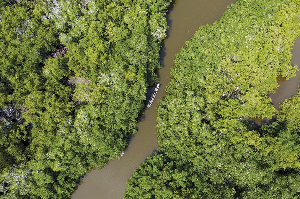 Entre manglares